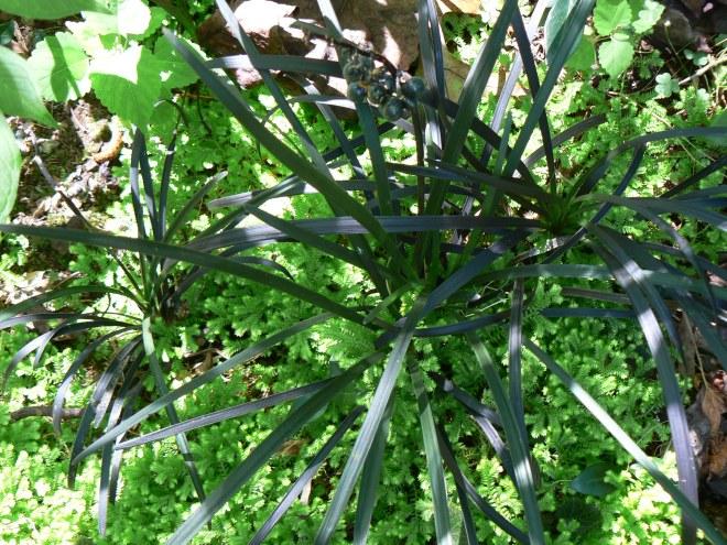 Blk. Mondo & Selaginella