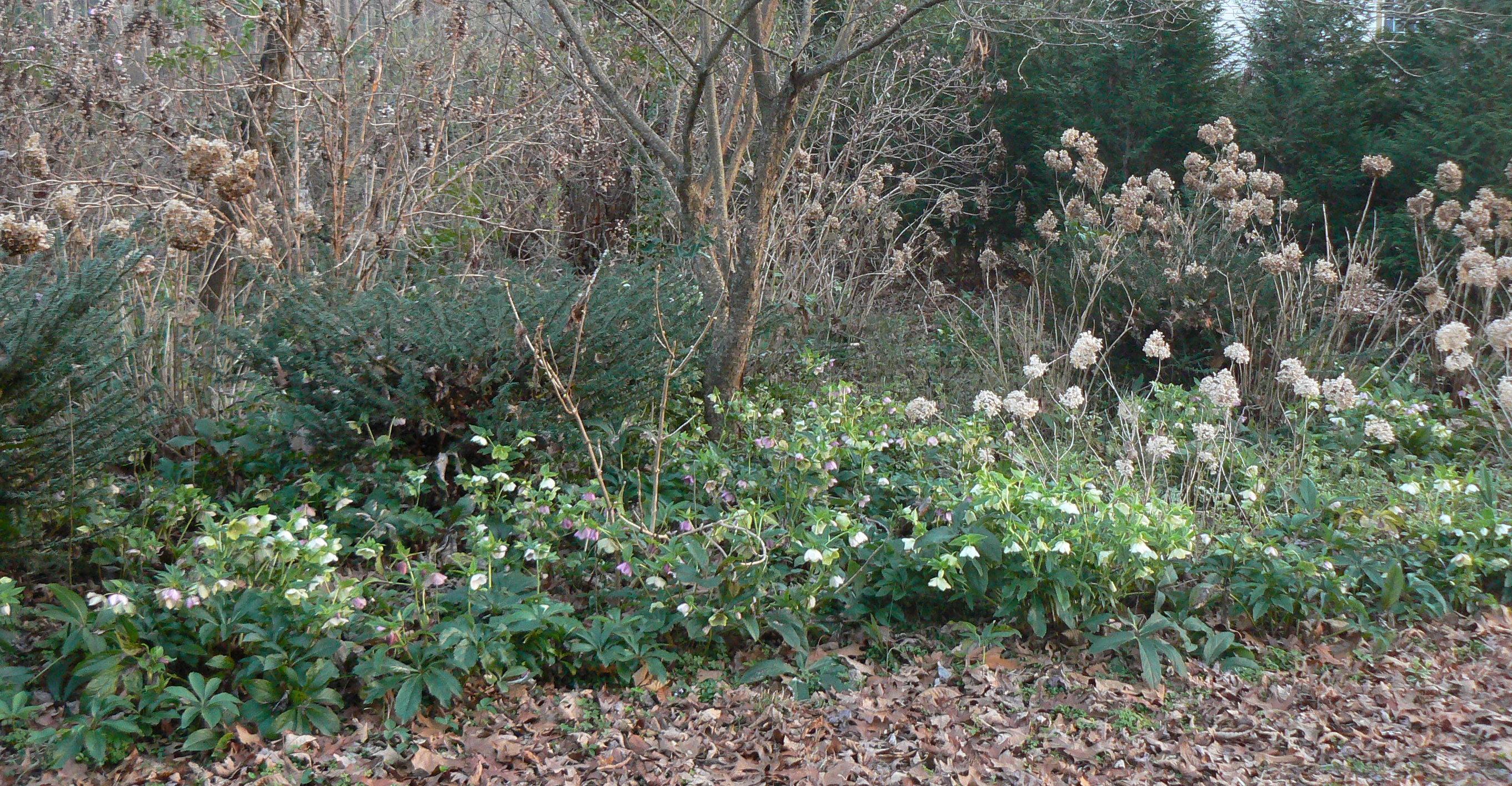 Evergreen Shrubs Recreating Eden Landscape Blog